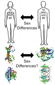 Our hypothesis that clinical sex differences in psychiatric conditions translate to molecular sex differences