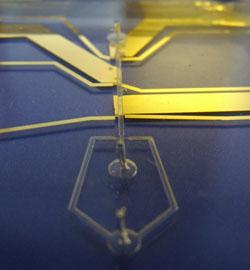 Image of microfluidic device