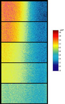 FLIM images of diffusive mixing of the iodide ion at increasing distances downstream