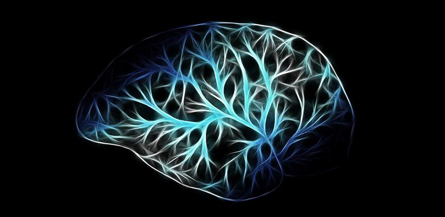 Drawing of brain with representations of neurons
