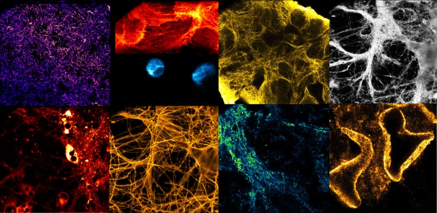 Light microscopy work in our Laser Lab