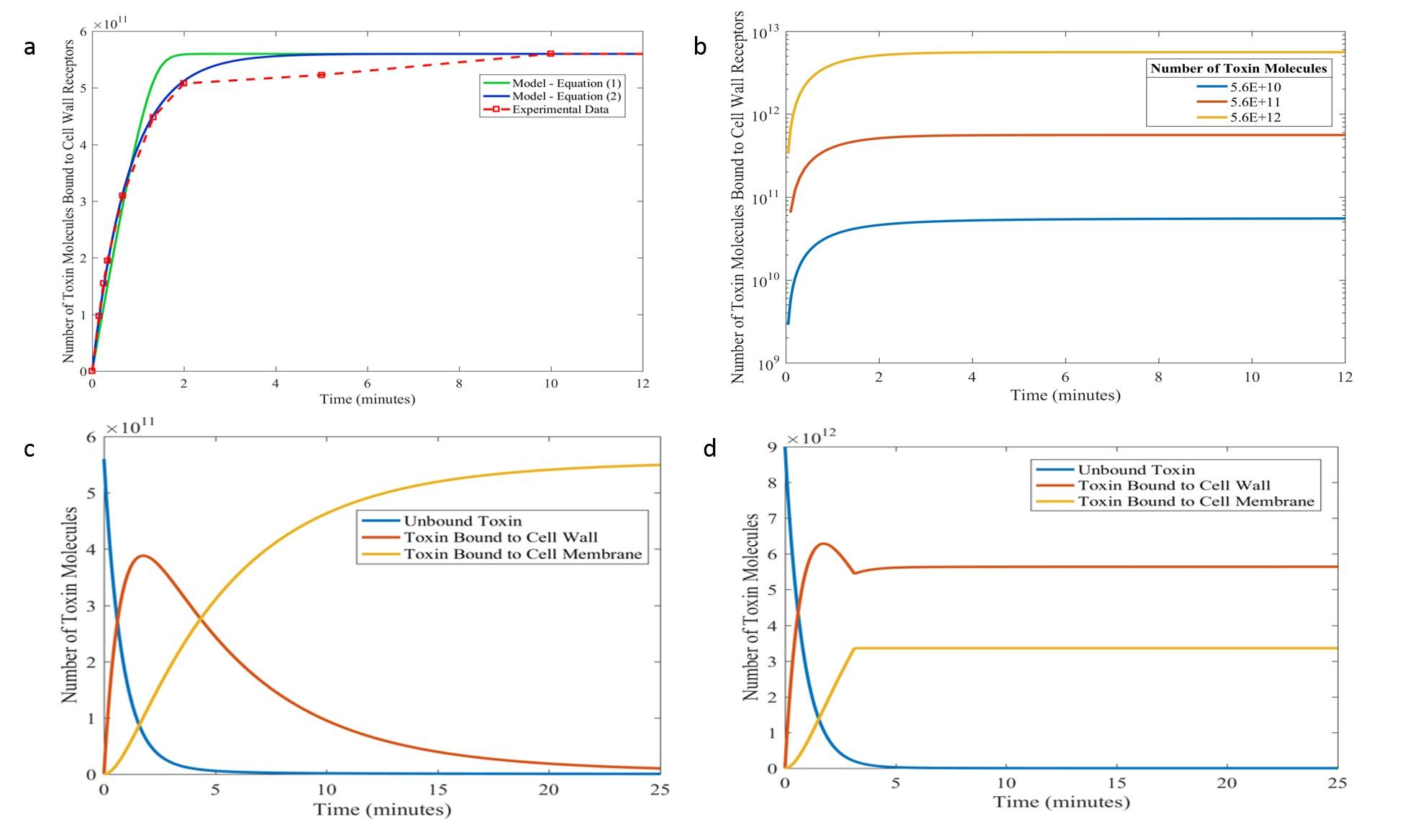 Modelling the behaviour of virus-infected killer yeasts for biotech applications