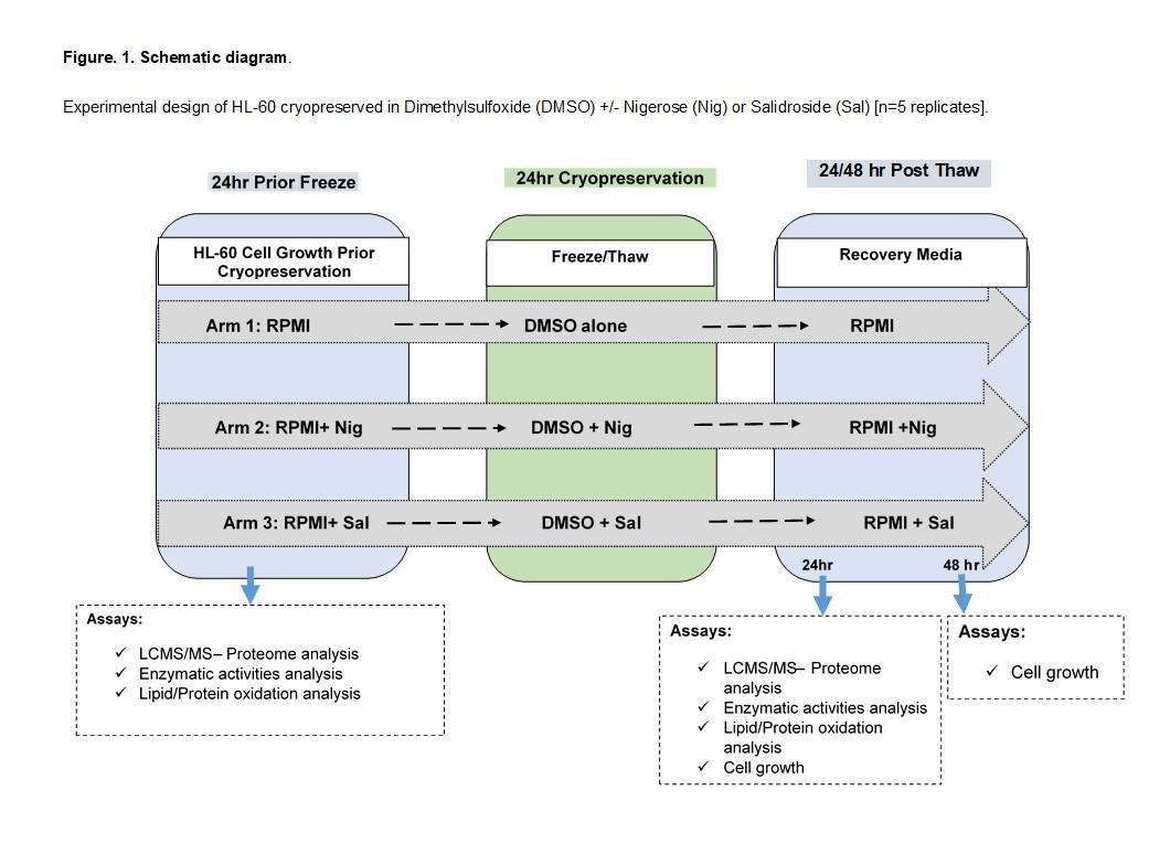 Enhancing Human cells cryopreservation/bio-banking using natural compounds